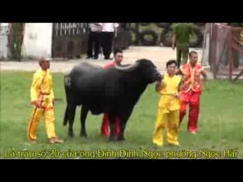 Tong Hop Vong Loai Choi Trau   YouTube