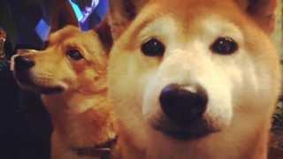愛犬さちとの幸せな毎日.