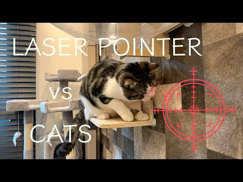 Laser Pointer vs Cats | 고양이 vs 레이져 | レーザーポインター vs ねこ (British Shorthair)
