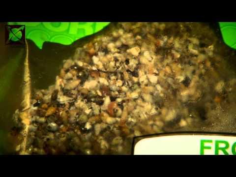 CC More Frozen Water Snails