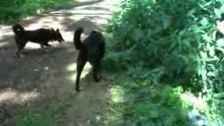 Собаки из приюта - Пират, Клёпа, Лизка