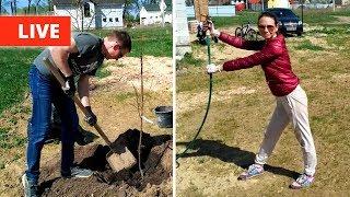 видео Стоимость посадки деревьев и кустарников. Посадка растений, саженцев деревьев и кустарников на участке в саду