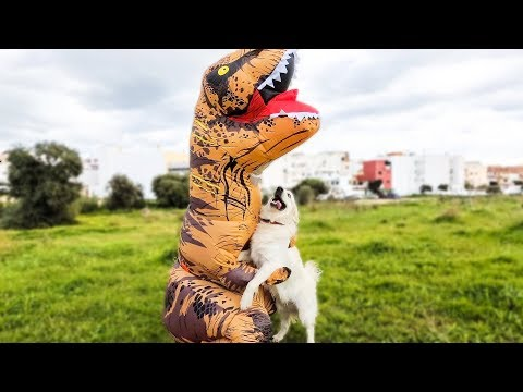 T-Rex Attacks Dog: Funny Dog Bailey
