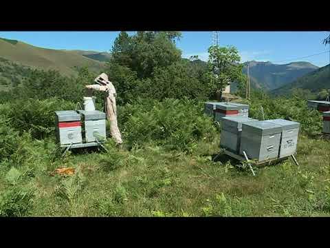 En Occitanie, la récolte de miel s'annonce médiocre - - France 3 Occitanie