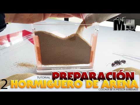 COMO PREPARAR UN HORMIGUERO DE ARENA | Hormigas Messor Barbarus