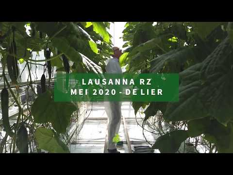 Komkommer Lausanna RZ