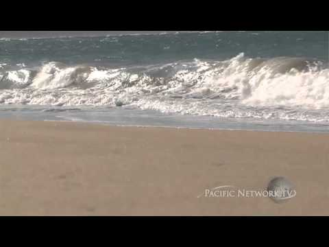 Hawaii Artists - Niihau Shell Lei Making Pt 2