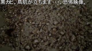 <閲覧注意>酸素系漂白剤で10年使った洗濯槽のお掃除 ーwashing machine tub with oxygen bleach. thumbnail