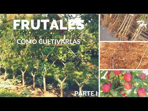 Como plantar frutales