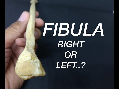 FIBULA - SIDE DETERMINATION