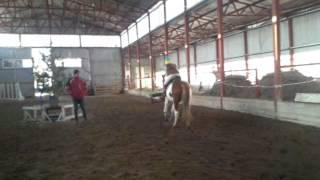 Cпортивная секция для детей, обучение верховой езде Черкассы