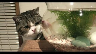 金魚とねこ。-Goldfishes and Maru&Hana.-