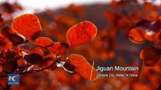 Jiguan Mountain's Autumn Scenery