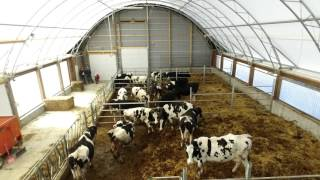 Drost Family Dairy Farm 50' x 100' Atlas Building Series Heifer Barn