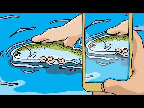 Safe Fish Handling