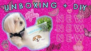 Unboxing Rabbitgoo, new harnes, DIY, Coton de tulear I Lorentix