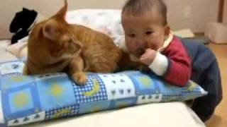 Video divertido bebe y gato jugando animales y niños videos de risa y humor