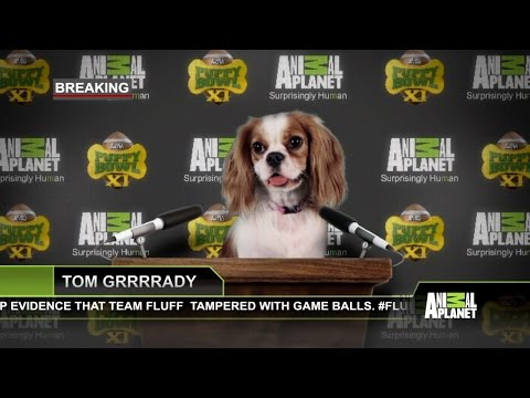 Team Fluff Faces the Music for Alleged Pre-Game Shenanigans | Puppy Bowl XI