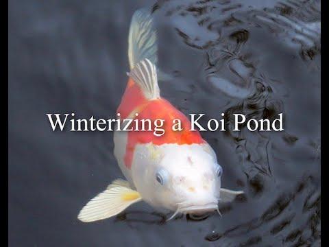 Winterizing A Koi Pond