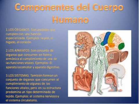 Medicina Legal Fundamentos de la Anatomia Humana - YouTube