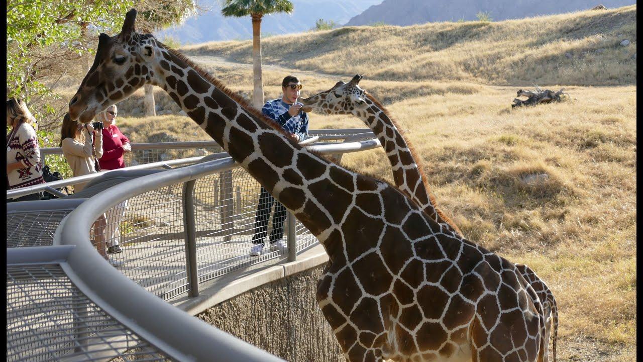 4k Animal Plant Highlights Of The Living Desert Zoo Gardens Youtube