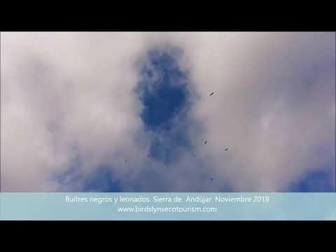Observación de aves y lince ibérico en Sierra Morena