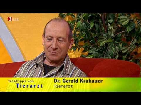 Whippets of Gentle Mind bei 3sat