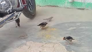 please save gauriya