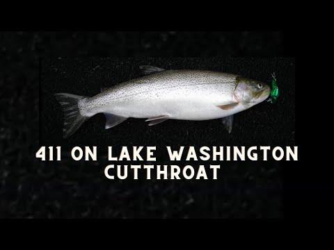Lake Washington Cutthroat Trout