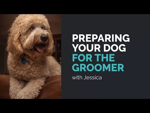 Preparing Your Dog For The Groomer