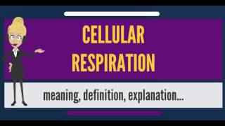 What is CELLULAR RESPIRATION? What does CELLULAR RESPIRATION mean? CELLULAR RESPIRATION meaning