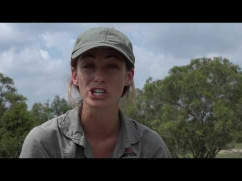 WE listen to the young voices in celebration World Wildlife Day 2017 - #safariLIVE