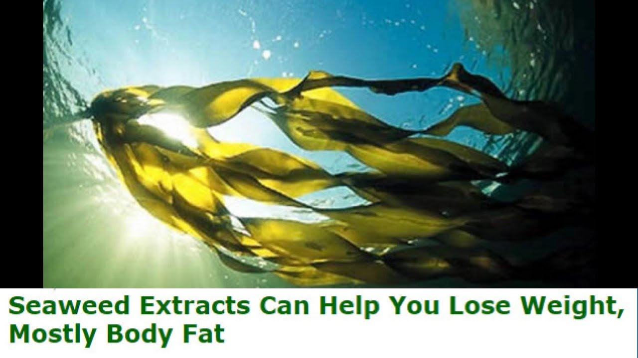 Can Seaweed Help You Lose Weight