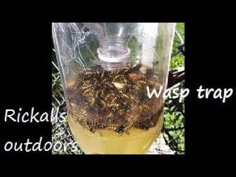Diy Wasp Trap You