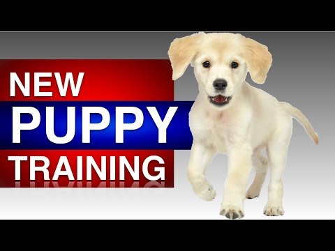 first-time-puppy-training-with-rosie!