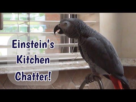 Einstein's Kitchen Chatter