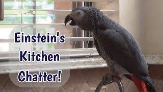 Einstein's Kitchen Chatter thumbnail