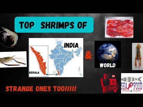Shrimps Farmed|Wild-caught Of Kerala|India|World|Strange Ones|Seafood Cravers&Players|ArunAlex