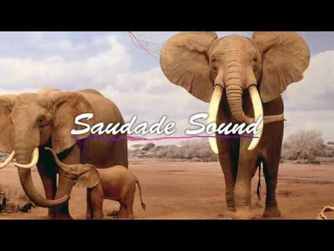 Savant - Elephant