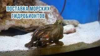 Мартовская поставка морских рыб и других гидробинтов (Marine aquarium)