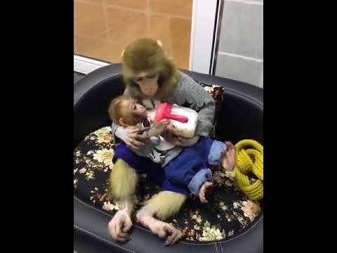 Adorable Imagen De Una Mamá Mono Dando El Biberón A Su Bebé Youtube