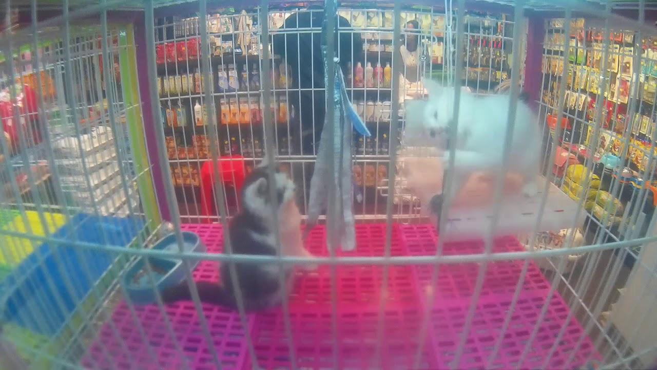 Pet Corner Pet Shop Grooming Dan Penitipan Hewan Di Gajah Mada