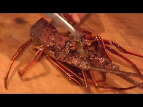 EXTREMELY GRAPHIC: How To Clean and Prepare aLive Huge Lobster