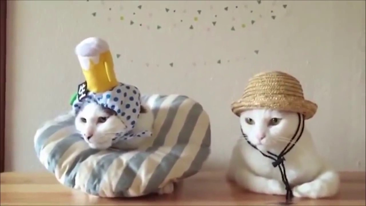 смешные картинки с котами до слёз