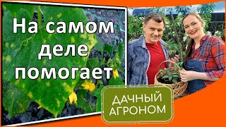 Садоводам: способы борьбы с болезнями, которые действительно работают