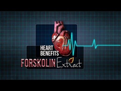 Forskolin Supplement Coleus Forskohlii Extract