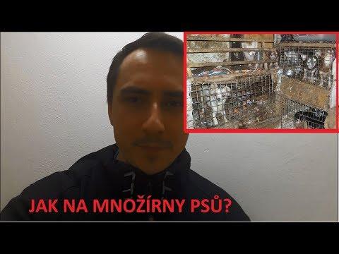 Boj s množírnami podle MVDr. Jiřího Žáka.