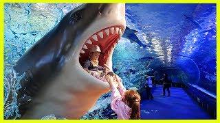 Kids at the Aquarium Family Fun activities for Children Ocean Funny video