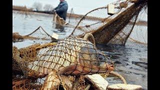Рыбалка получилась не простая, а золотая