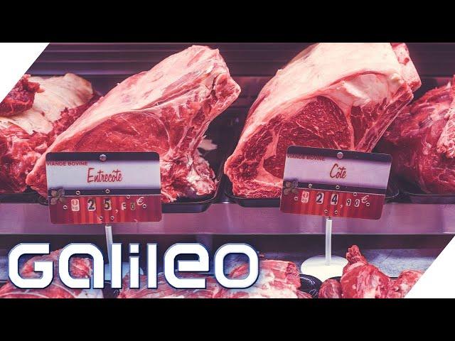 60kg Fleisch pro Jahr! Massentierhaltung vs. Bio-Fleisch - Wie lösen wir das Problem? | Galileo